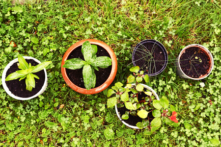 screen savers: lawn and pot sprout plants close up photo Stock Photo