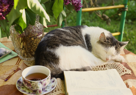 sleeping cat with open book lilac in vase and tea cup composition Stock Photo