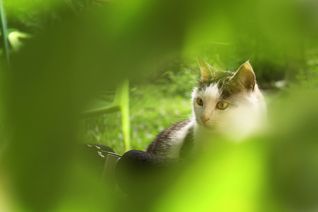windows and doors: country cat close up photo on sunny day in green leafs background