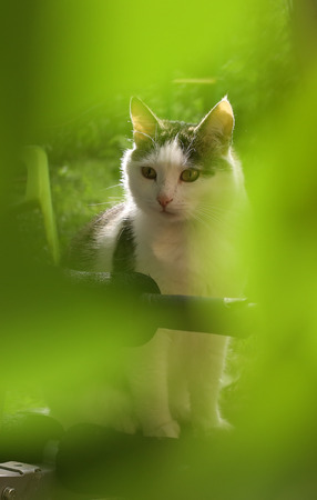 cat close up photo in the green garden leafs summer portrait