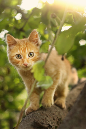 red kitten close up photo on tree on summer leafs background Stock Photo
