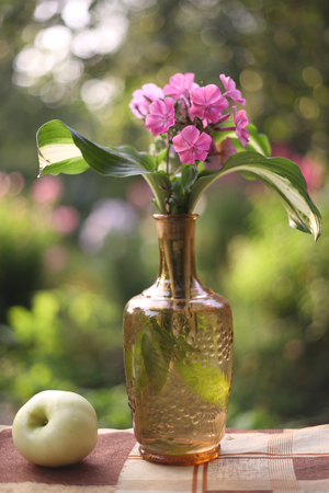 flox flowers pink in crystall vase with apple still life on the summer garden background