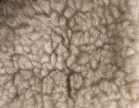 sheep wool texture white close up photo