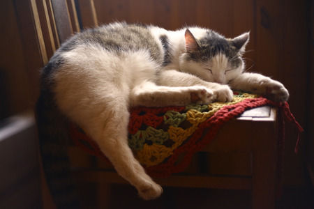 cat sleep on knitted tissue in country interior close up photo