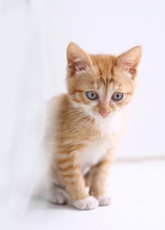 red hair kitten close up photo on windowsill