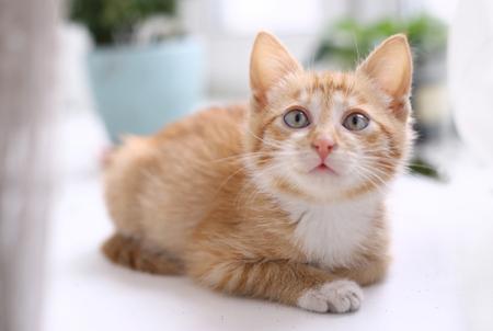 red hair kitten close up photo on windowsill play Stock Photo