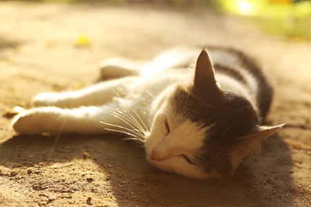 cat lay on summer siesta close up outdoor photo Stock Photo
