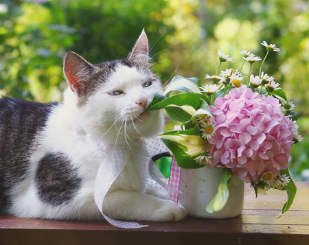 cat chewing hydrangea flowers post card photo