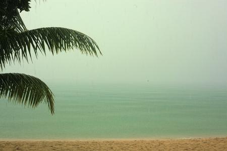 Tropical rain Banque d'images