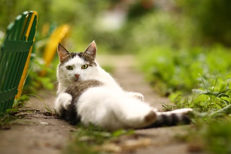 cute tom male cat funny photo wash himself on summer green garden background