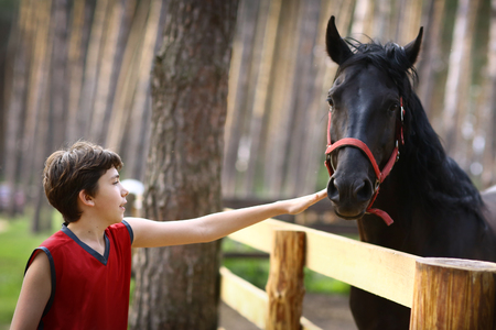 teenager boy stroke black horse with halter close up summer photo