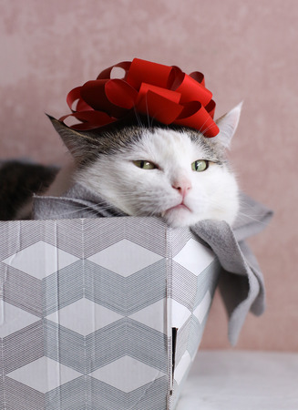 funny cat photo sleeping in gift box with red bow on head as a hat Standard-Bild