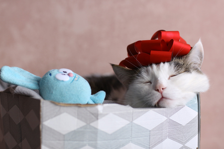 funny cat photo sleeping in gift box with red bow on head as a hat Foto de archivo - 118480902