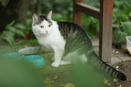country cat chewing eating green grass close up photo 免版税图像