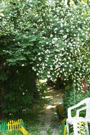 jasmin bush photo on green garden background Banco de Imagens - 127534013