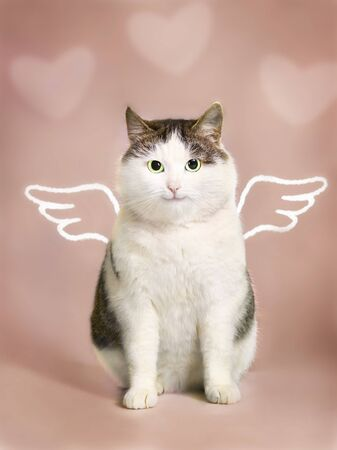 valentine card with fat smiling cat  with angel wings and heart frame on the pink background