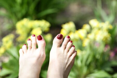woman feet with red pedicure on summer green grass with tulips background closeup photo Stock Photo
