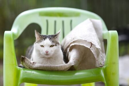 country cat outdoor close up photo on the chair on green grass background