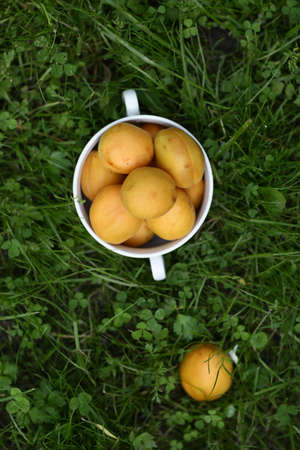 healthy breakfast - apricots in bowl close up vertical photo with copy space on green grass background Stock Photo
