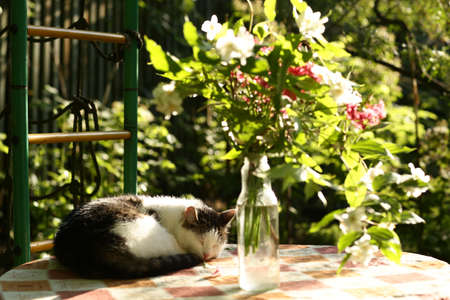 country funny cat outdoor closeup photo relaxing on table with flower bouquet on green garden background 스톡 콘텐츠