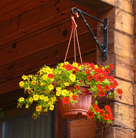 flower basket hang on country house porch close up photo