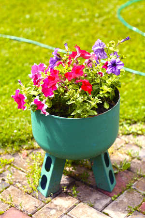 decorative steel flower vase with petunia flowers on the green lawn background Фото со стока