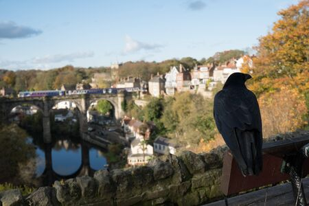 A black crow overlooking the view of Knaresborough viaduct