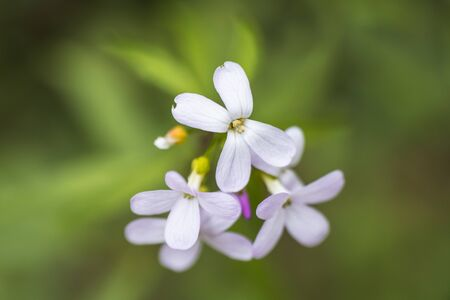 A bunch of small white petal flowers close up in the wild