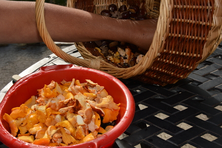 cleanly: Clean, Prepare Mushrooms