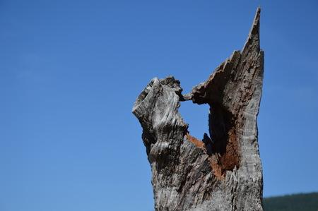 blue background: Broken Tree, blue sky background
