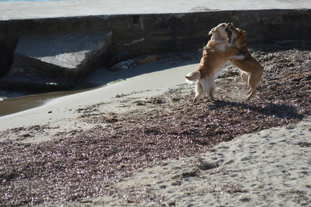 Dogs playing on the beach Imagens