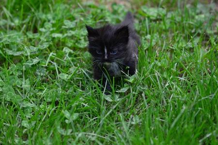A Kitten in the Garden Stock Photo
