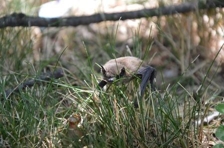A bat on the garden floor in the daylight