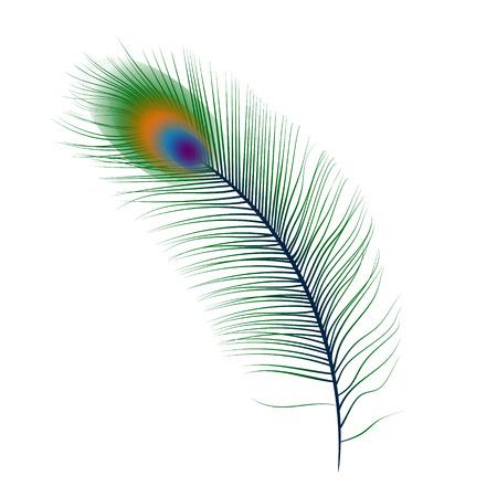 pluma de pavo real: Aislado vector de la pluma del pavo real