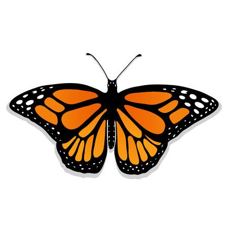 ●リアルな蝶イラスト。