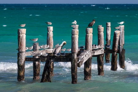 old pier: Seabirds resting on an old abandoned pier in Riviera Maya, Mexico