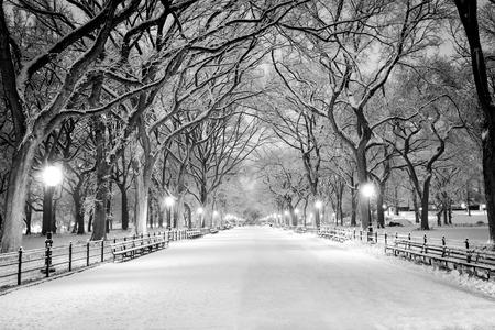 The Mall, Central Park, New York tijdens een sneeuwstorm, vroeg in de ochtend.