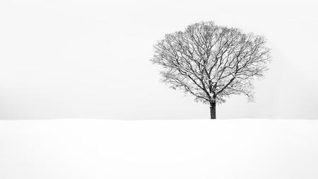 snow field: Lone snowy tree