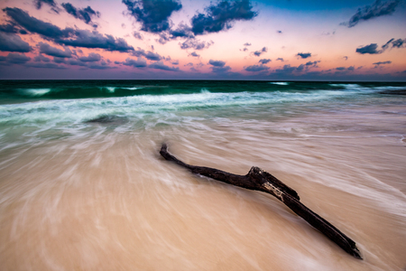 riviera maya: Driftwood on a deserted caribbean beach, at sunset, in Riviera Maya, Mexico. The long exposure creates an artistic motion effect. Foto de archivo