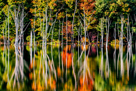 inundated: Fall reflections and a flooded forest at Monksville Reservoir, Hewitt, New Jersey, USA