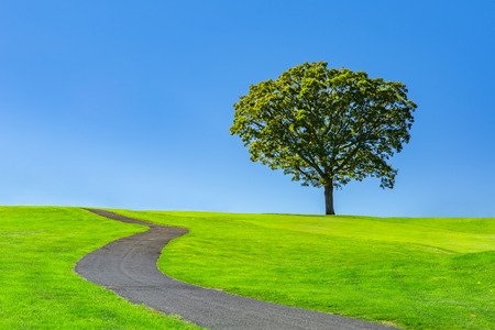 lonely road: Lone tree on a green meadow under a clear blue summer sky Stock Photo