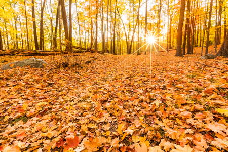 ground floor: Fallen leaves and fall foliage lit by sunset sunbeams, shining through the forest trees, at Bear Mountain state park, New York