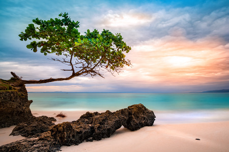 Exotic seascape with sea grape trees leaning above a rocky Caribbean beach at sunset, in Cayo Levantado, Dominican Republic