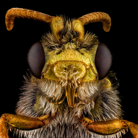 creepy alien: Extreme macro portrait of a bee, magnified through a microscope objective.