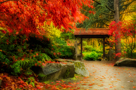 Wooden Japanese Gate and lush fall foliage in Kuobota Garden, Seattle