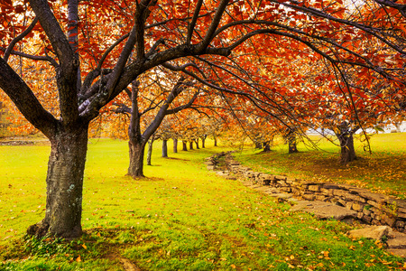 Autumn in Hurd Park, Dover, New Jersey with fall foliage on cherry trees. Stock fotó