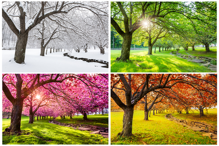 Four seasons with japanese cherry trees in Hurd Park, Dover, New Jersey 免版税图像