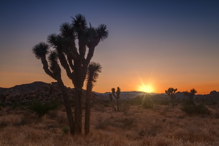 Joshua tree park at sunset, in Mojave Desert, California Banque d'images - 108371764