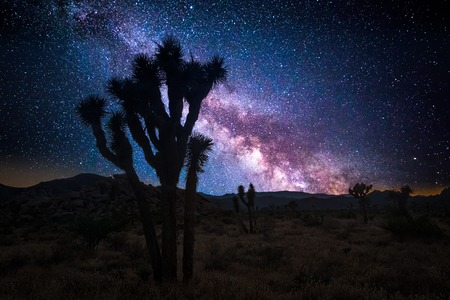 Joshua tree park under a starry night, in Mojave Desert, California Banque d'images - 104516027