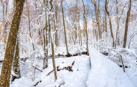 Trail through a forest covered by a thick layer of snow in a New Jersey park Banque d'images - 120564185